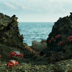 Planet Earth II Season 1 screenshot 9