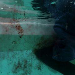 Bloodline season 3 screenshot 10