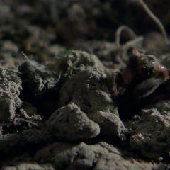 The First Season 1 screenshot 10